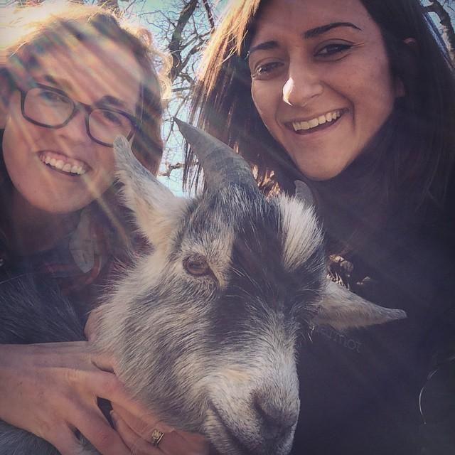 KOBA presents: The Goat Selfie. Thank you Mickey and Noah for the delicious AIP brunch on the Trescott Farm! #KOBA #chiropractic #neurology #nutrition #berkeley #ontheroad #portland #aip #autoimmunepaleo #glutenfree #dairyfree #paleo #food #goatselfie #brunch #YUMMIES @mickeytrescott @fermatawoodworks @autoimmunepaleo