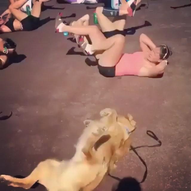 45 minutes into class when I've given up trying. . . . #isitoveryet #dogsofinstagram #exercise #pilates #yoga #horse #dog #animalchiropractic #equinechiropractic #caninechiropractic #dreamlife #ladyboss #livingthedream #hsp #empath #healer #helper #introvert #aip #autoimmune #autoimmuneprotocol #hashimotos #naturalmedicine #chiropractic #functionalmedicine #nutrition #homeopathy #CreativeChiropractor DrNatashaFallahi #DrNatashaF