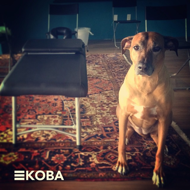 Koba-at-KOBA.-Have-a-doggone-fantastic-weekend-KOBA-chiropractic-neurology-nutrition-Berkeley-holist